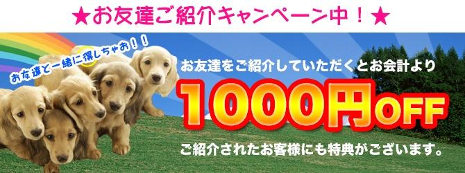 お友達をご紹介いただくと1000円OFF